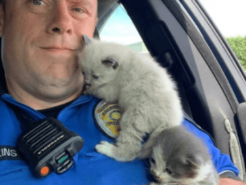 two kittens with police