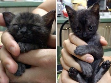 Couple Rescues Kitten from Alley, It Wouldn't Stop Giving Them Cuddles