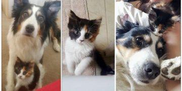 Dog 'Adopts' Kitten