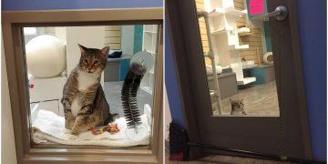 Cat Opens Enclosure at Shelter